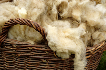 View: How to Clean Wool Area Rugs